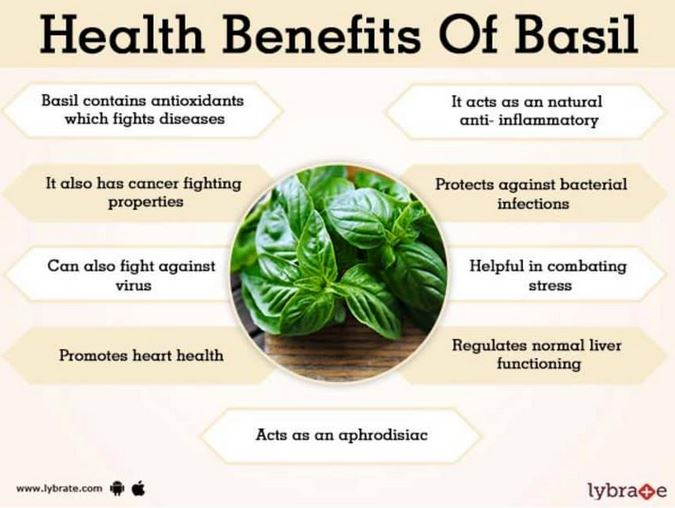 tremendous benefits of holy basil